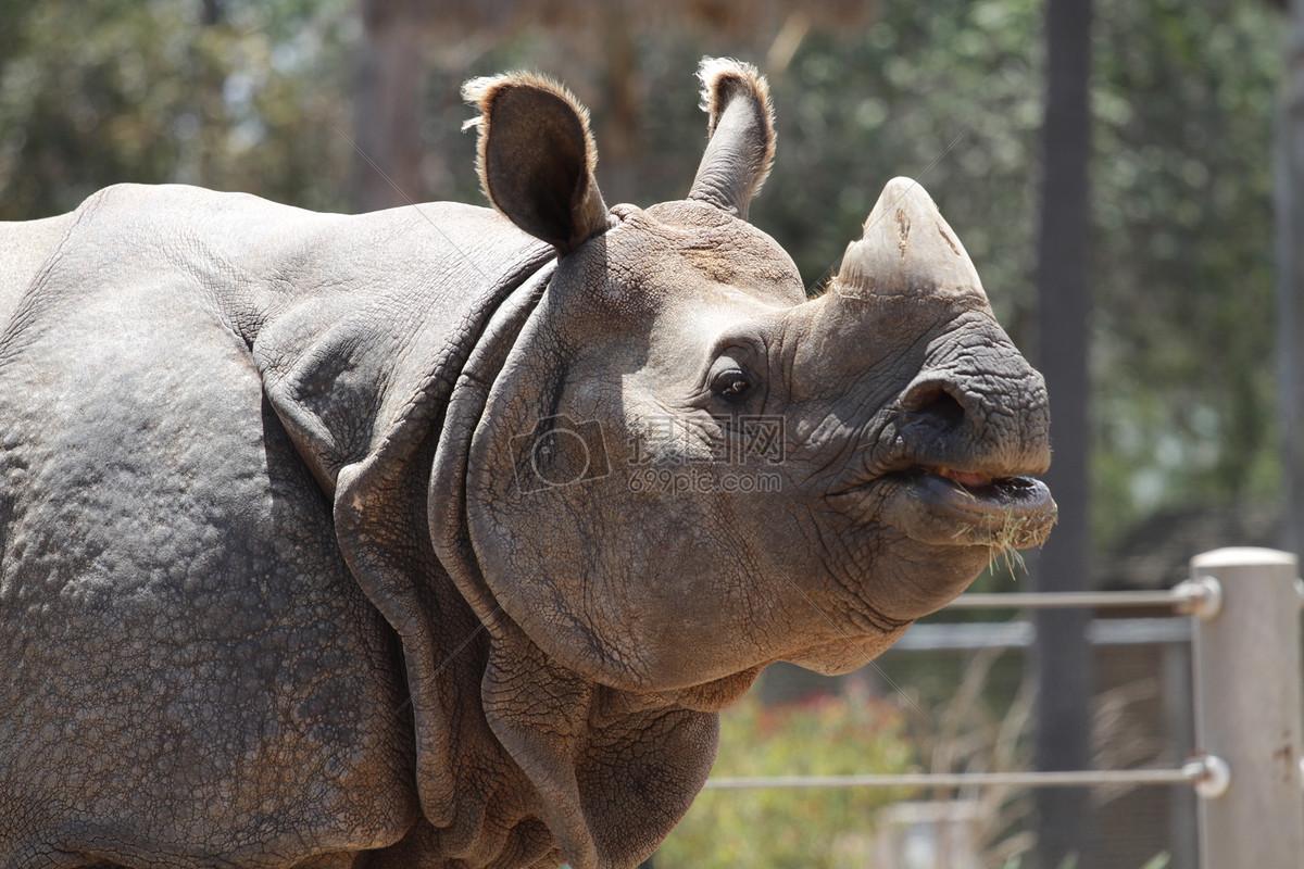 犀牛, 动物, 野生动物, 野生, 动物园, 野生动物园