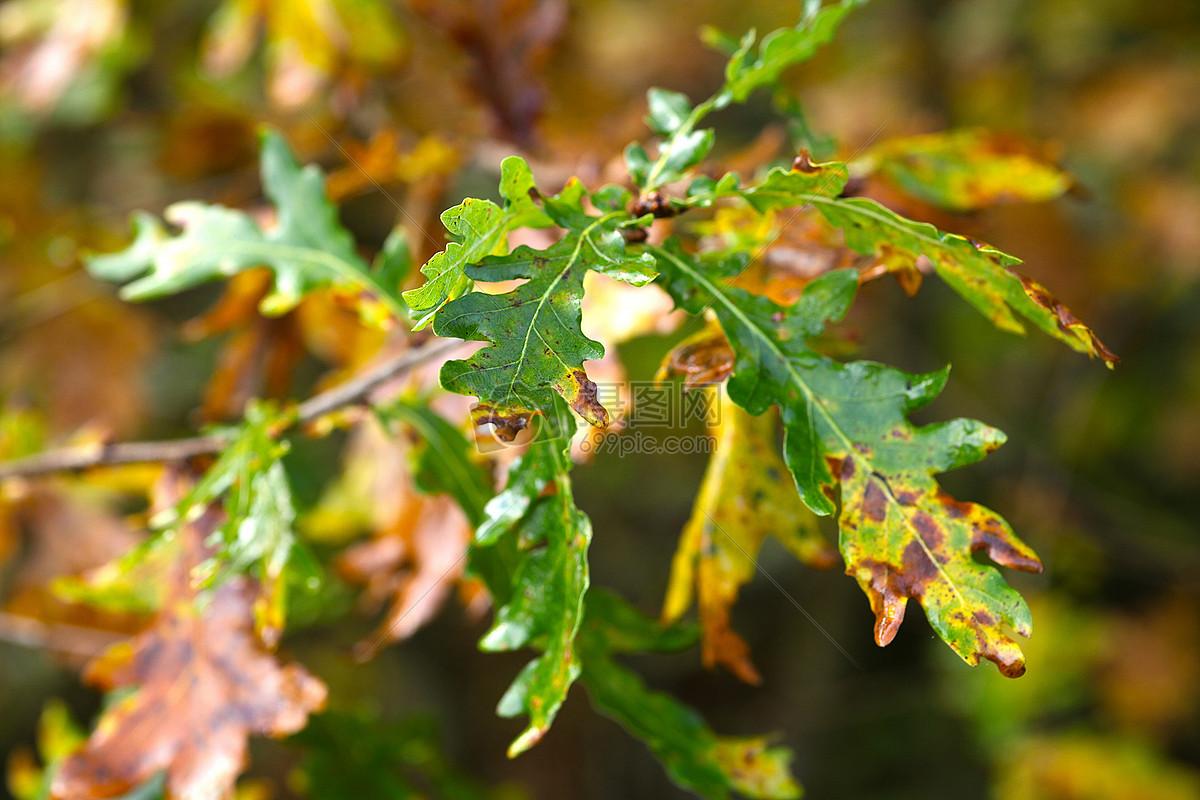 干枯的像树叶子