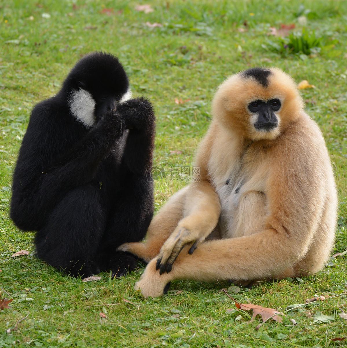 猴子动物免费下载_格式:jpg_大小:3605x3607像素_(:)