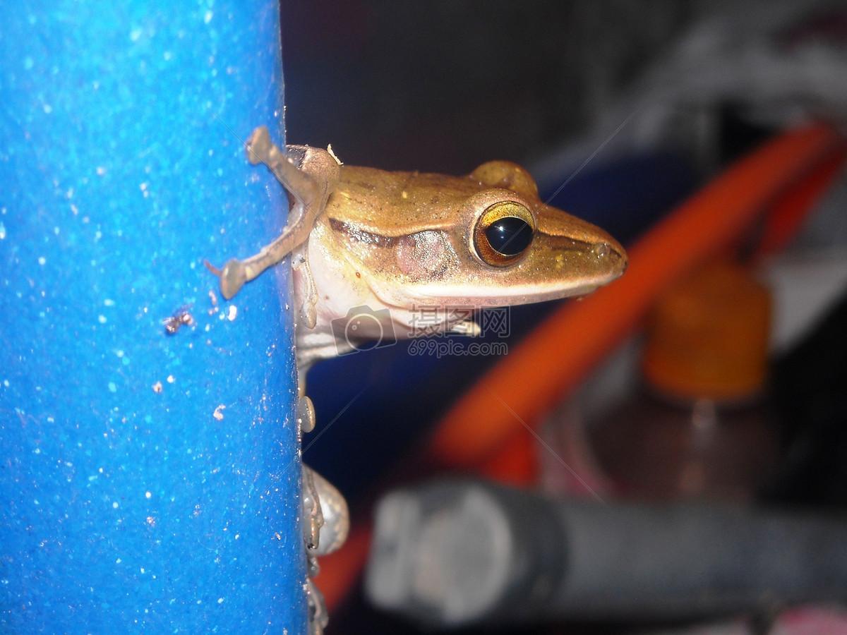 呆萌可爱的小青蛙