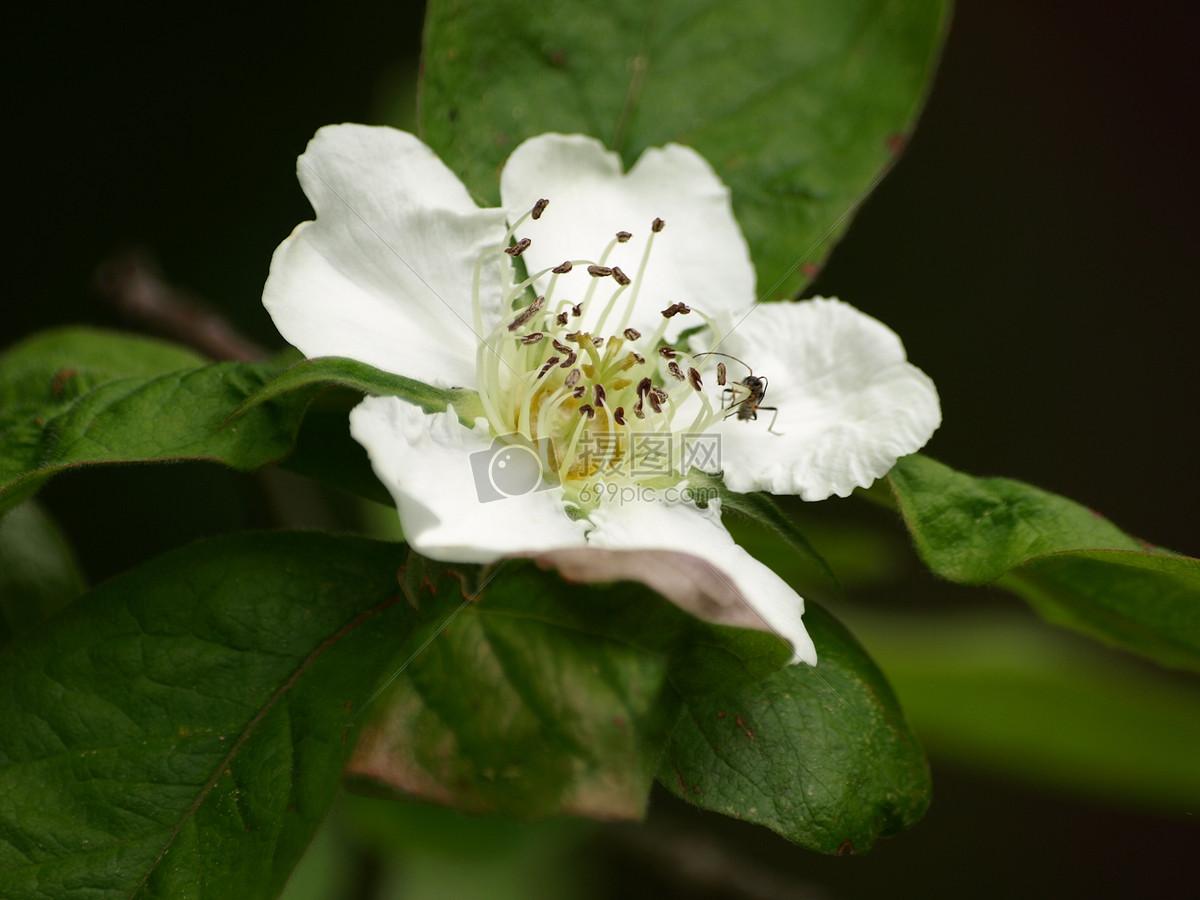 盛开的白色花朵