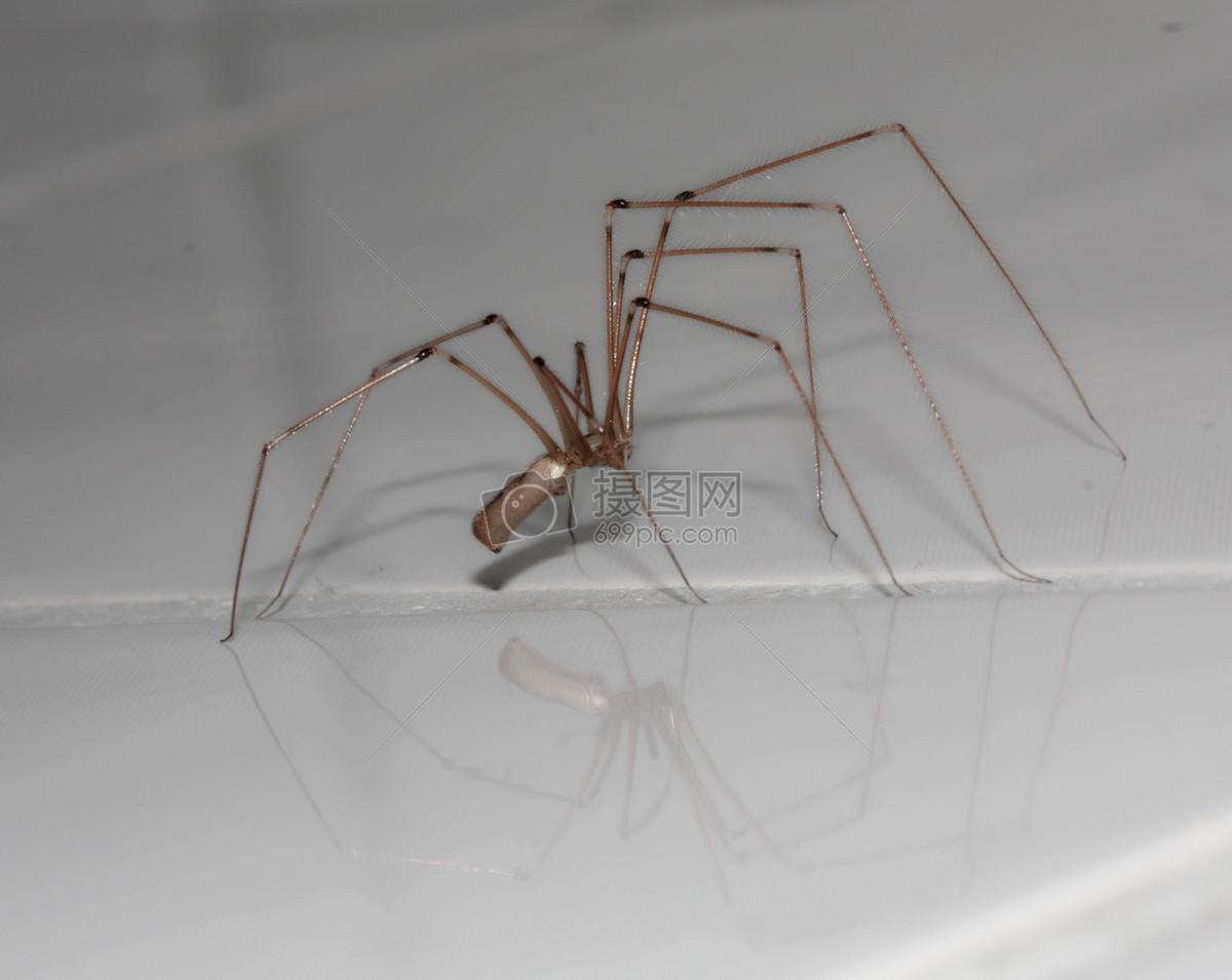蜘蛛动物免费下载_格式:jpg