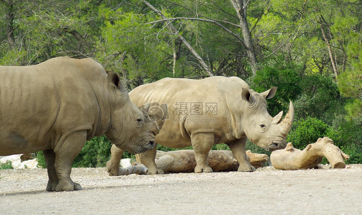 动物园里的犀牛