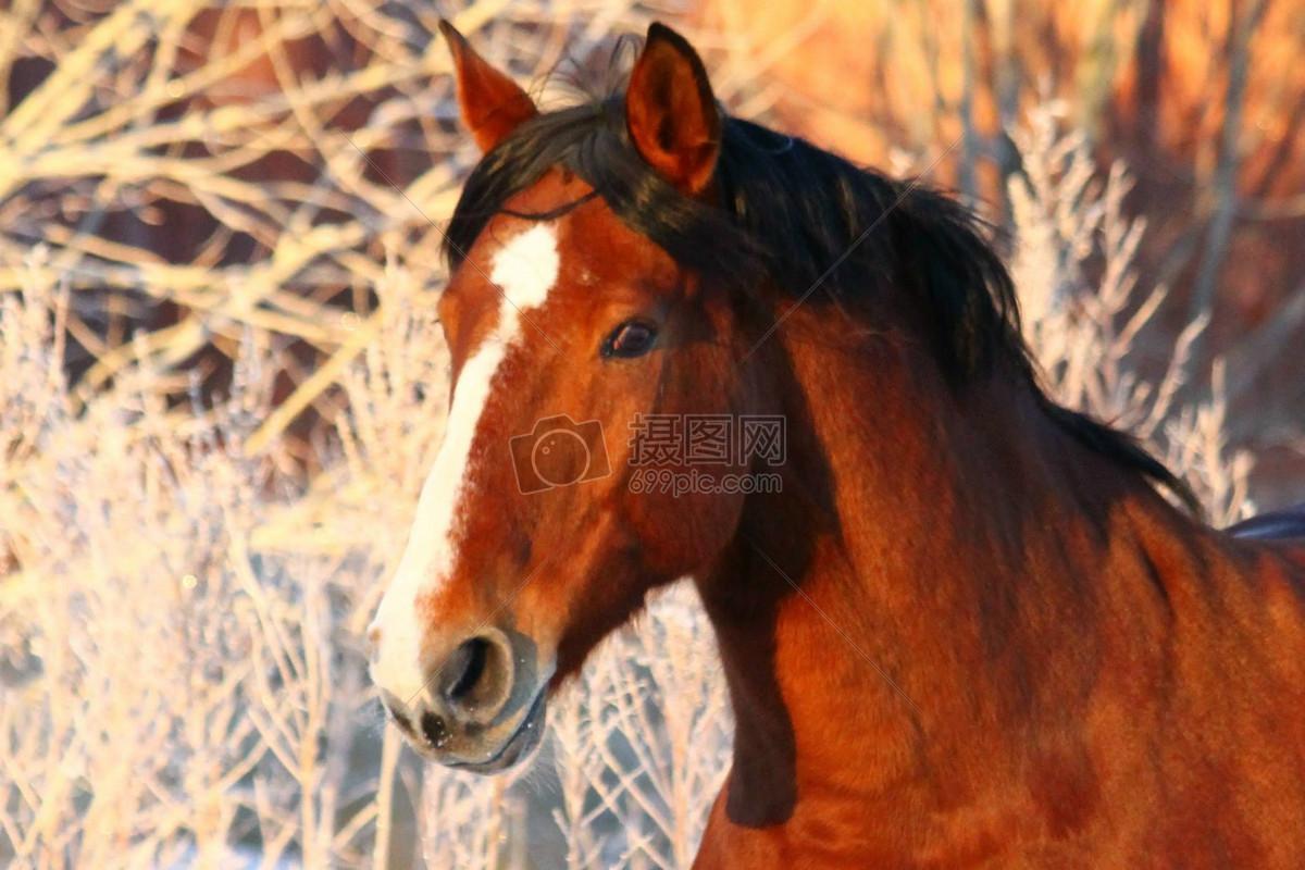 阳光下的野马动物免费下载