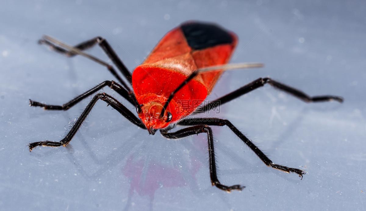纸箱手工制作甲虫视频