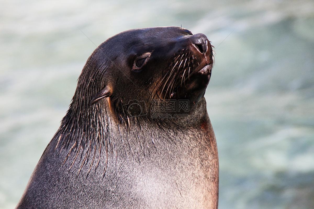 海狮卷门机接线图