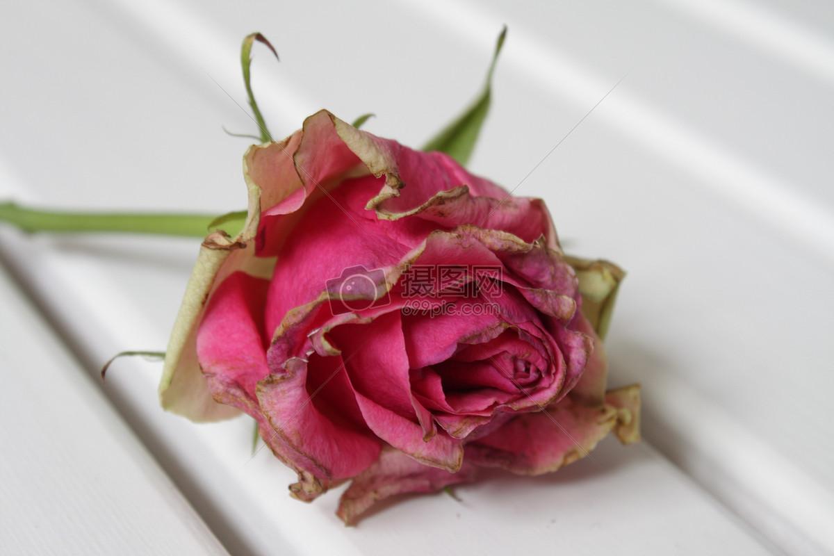 本次图片作品是关于自然/风景图片素材,主题是枯萎的玫瑰花 ,编号是