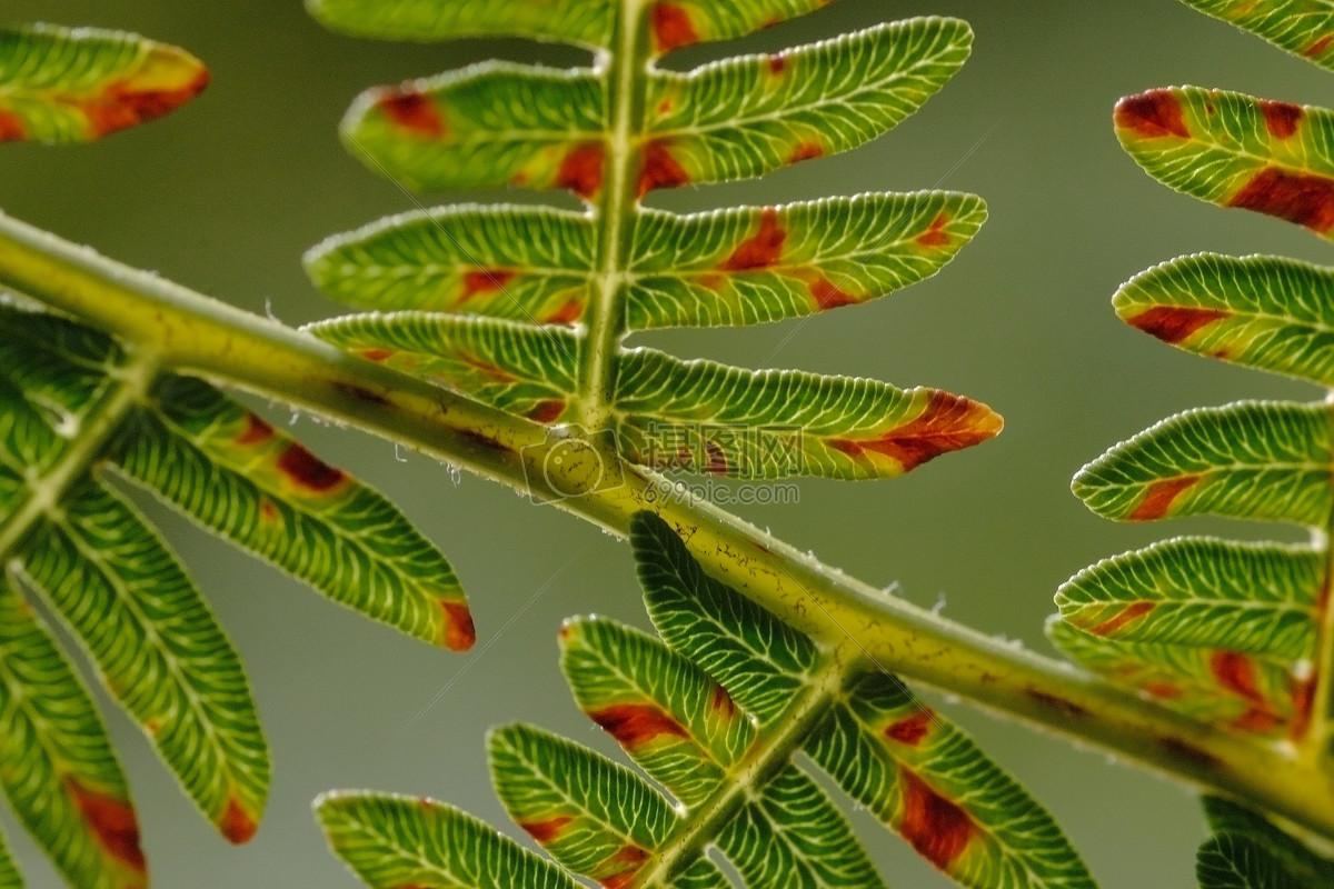 自然/风景 蕨类  找相似查看大图 蕨类免费下载 森林叶子自然 蕨类