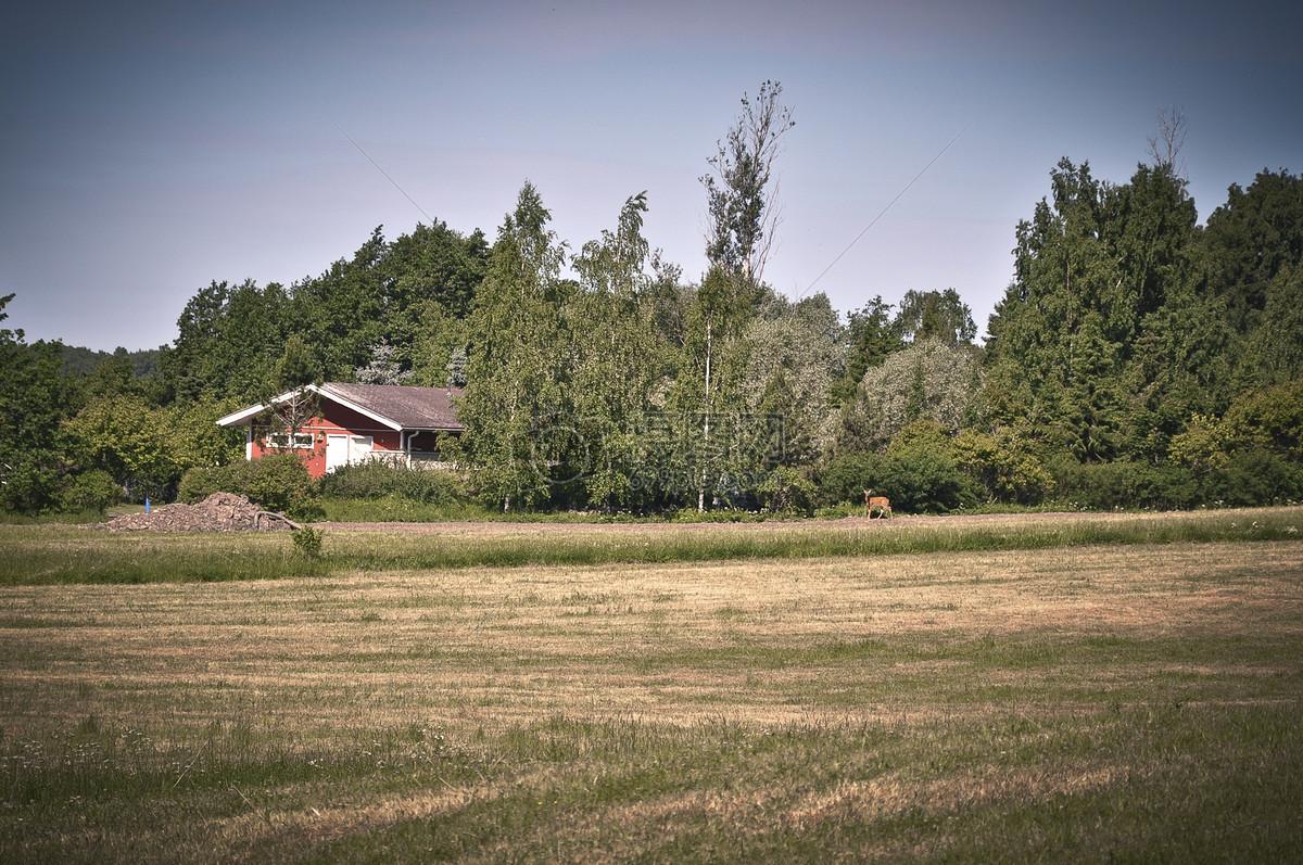 芬兰全自动伐木机