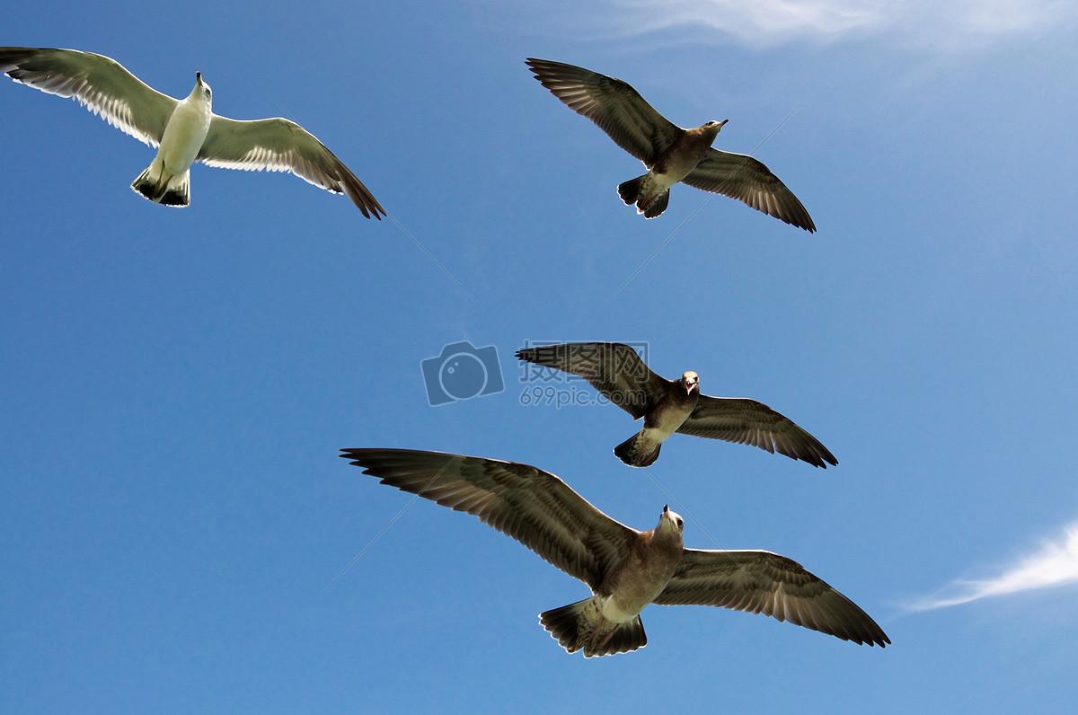 天空中飞翔的鸟儿高清图片免费下载_jpg格式_5357像素