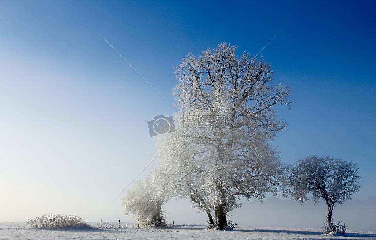 冬天里的树木