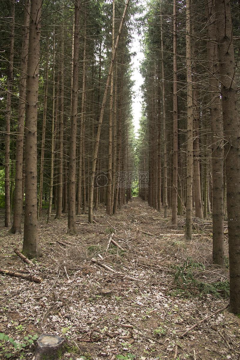稠密的小树林高清图片免费下载_jpg格式_3456像素_-千