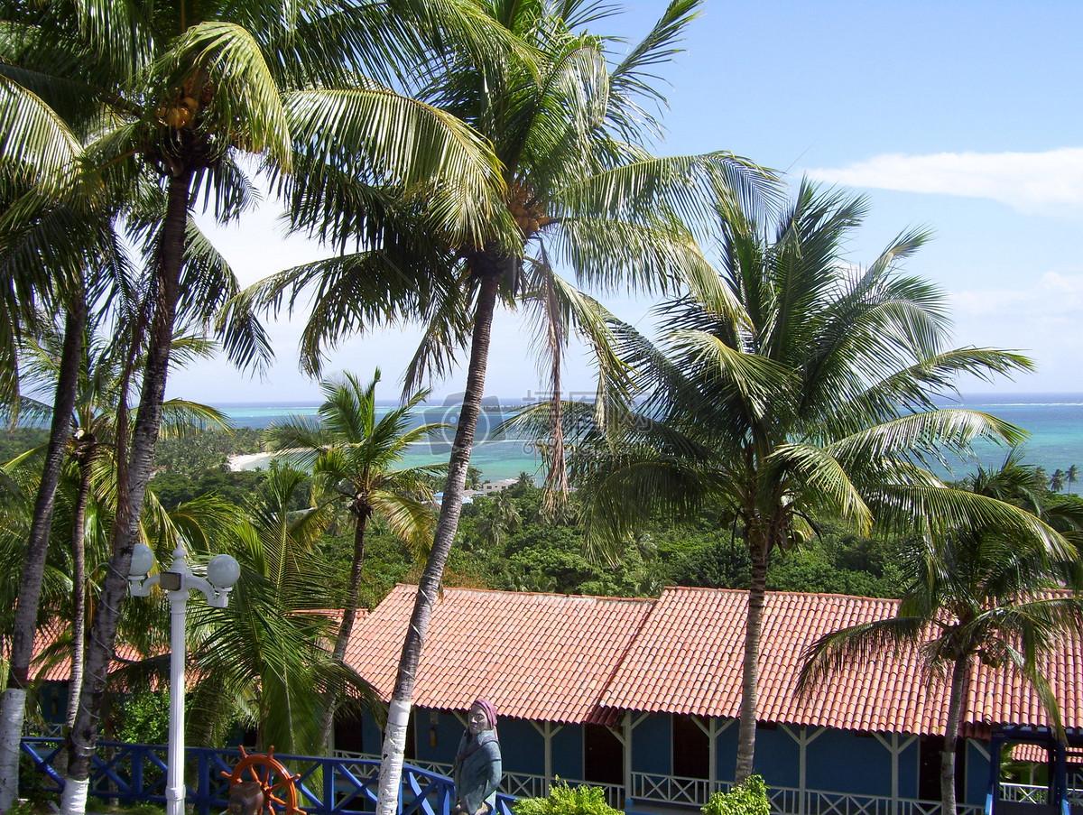 茂密的椰子树高清图片免费下载_jpg格式_2848像素_-千