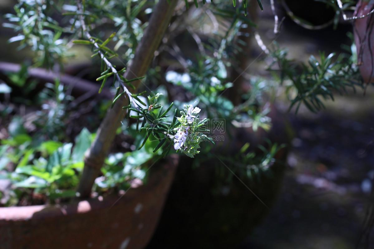 树枝上的绿叶高清图片免费下载_jpg格式_5184像素_-千