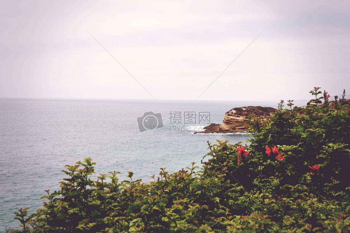 海,风景,自然,海洋,树木,灌木,红,花